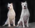 Карта Сокровищ фото собак, карта сокровищ картинки собак, карта сокровищ скачать картинки собак